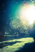Late sun in a park