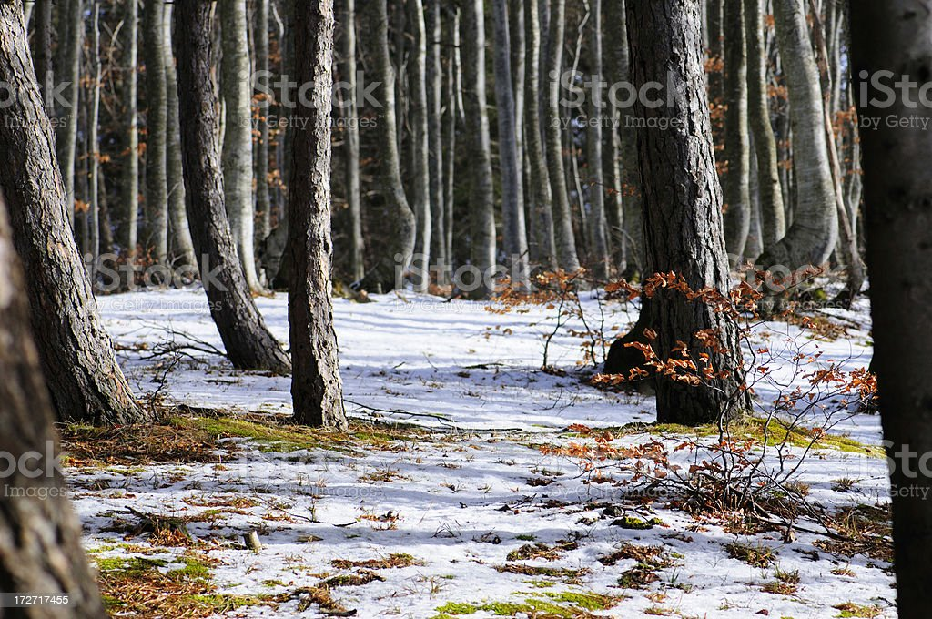 Late Winter royalty-free stock photo