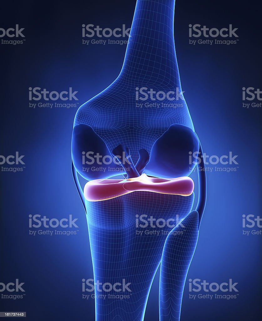 Lateral and medial meniscus anatomy stock photo