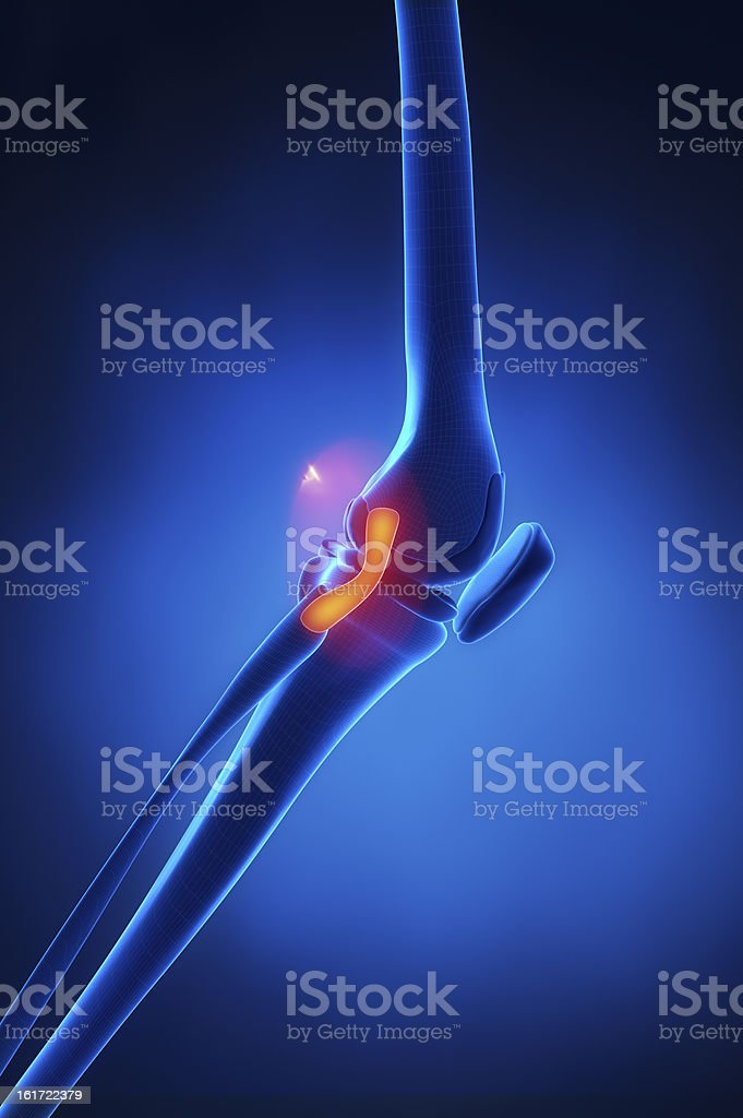 Lateral Collateral Ligament knee anatomy stock photo