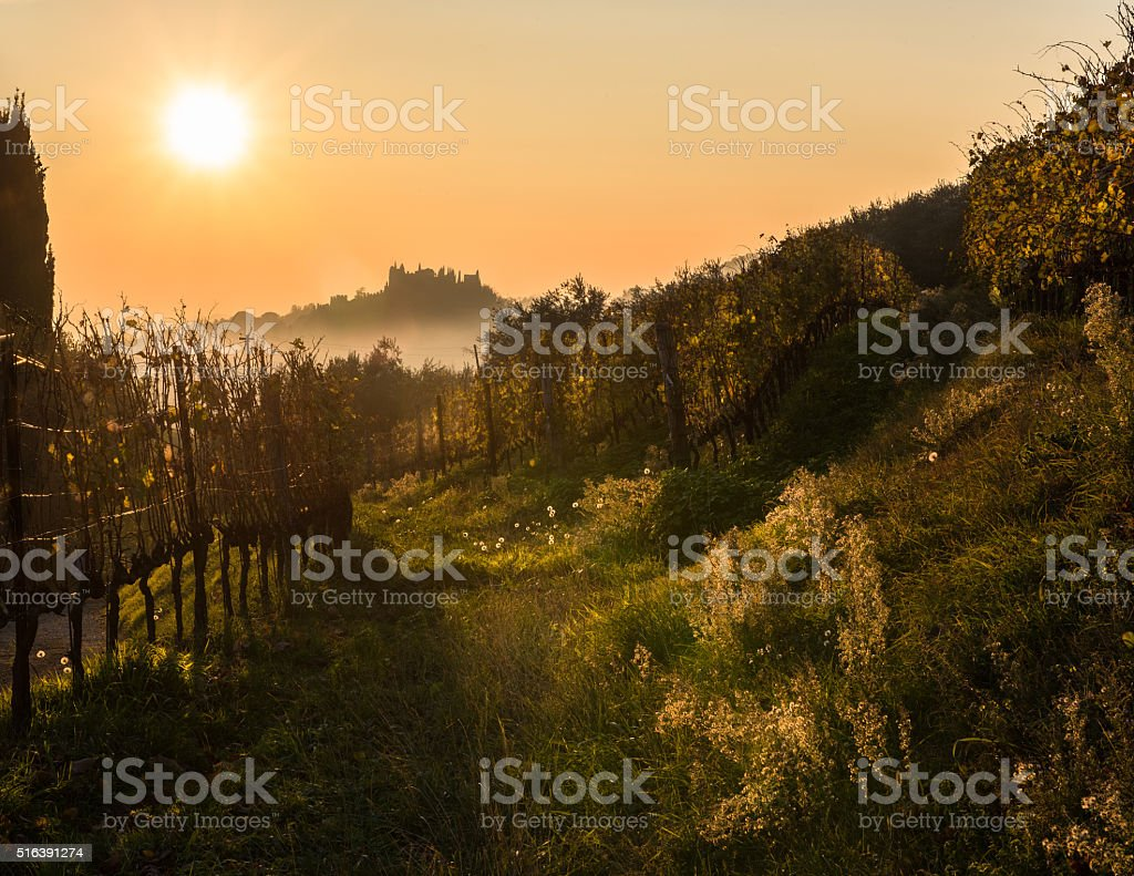 latest hot lights on the autumn vineyards stock photo