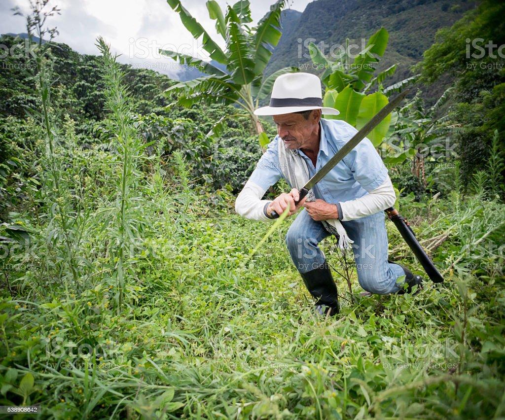 Latin American farmer working the land stock photo