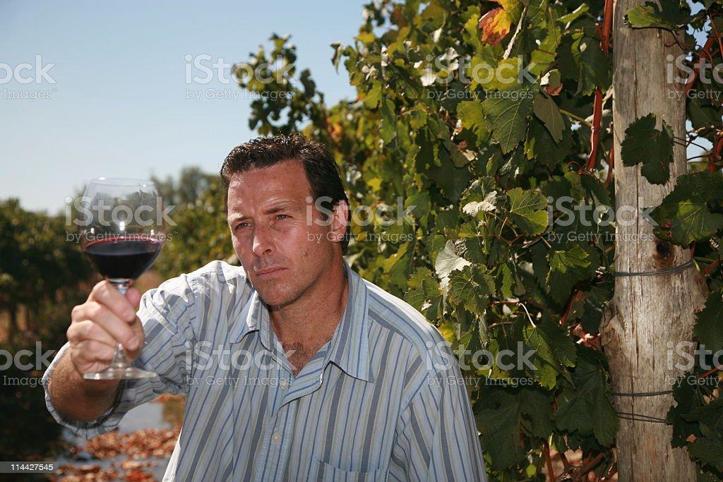 Latino Winemaker royalty-free stock photo