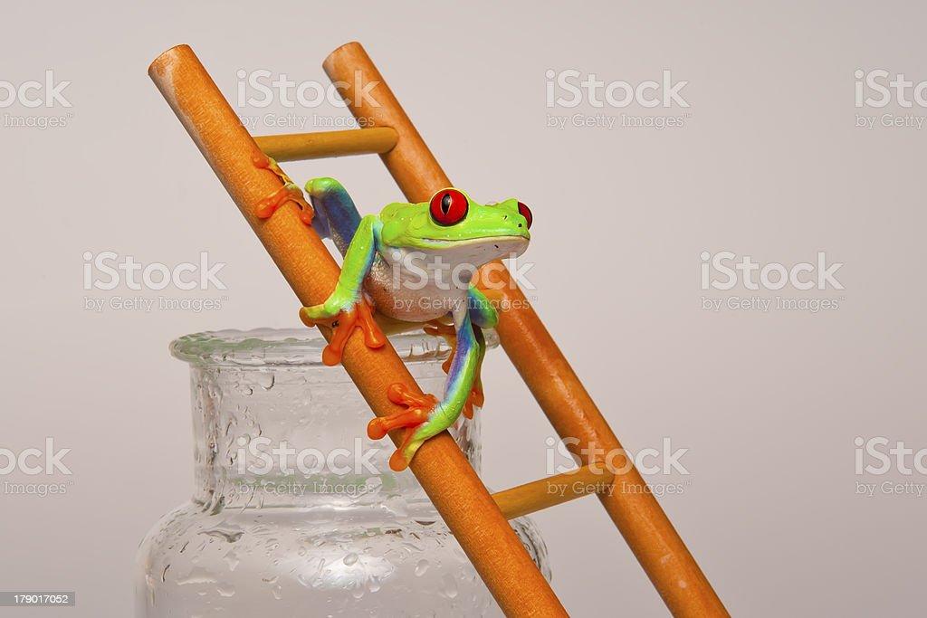 Laubfrosch auf der Leiter stock photo