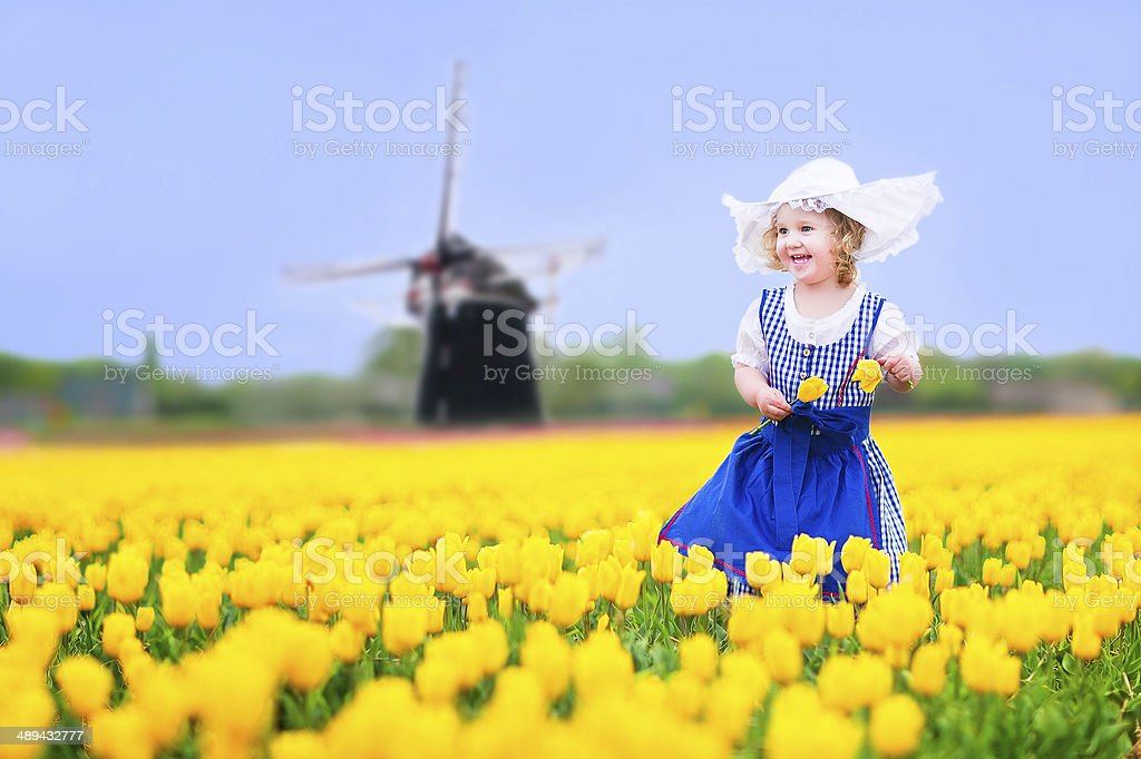 Laughing girl in national Dutch costume collecting tulips next windmill stock photo
