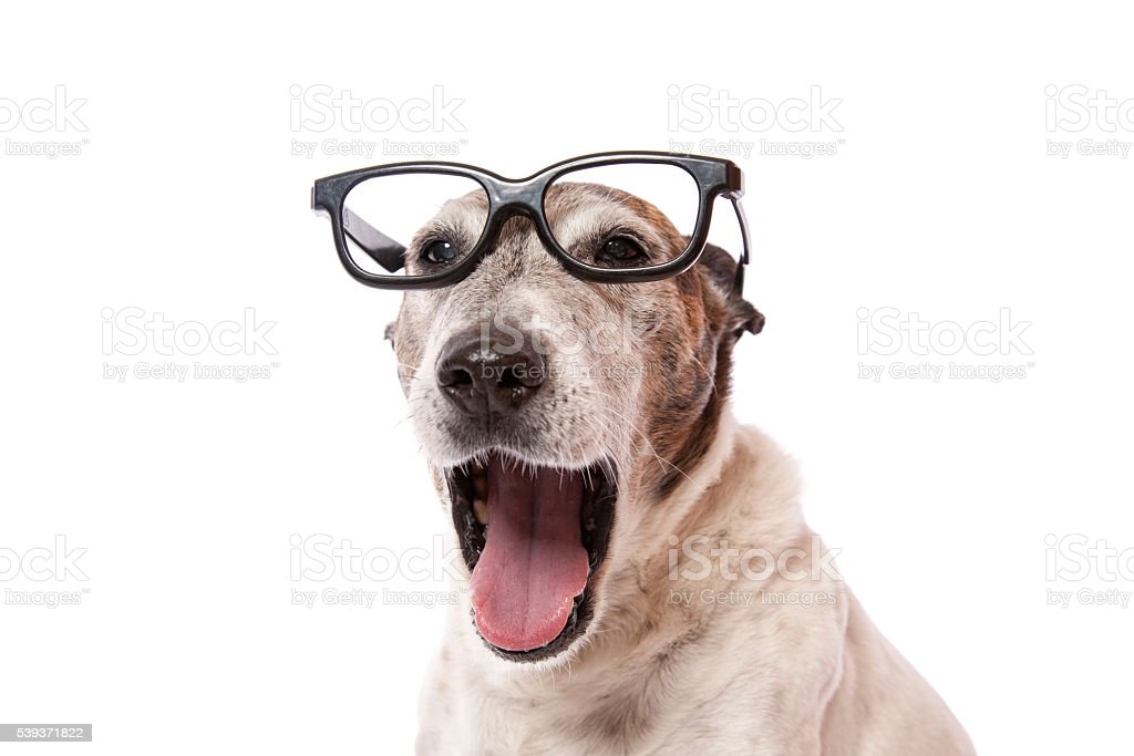 Laughing Glasses Dog stock photo