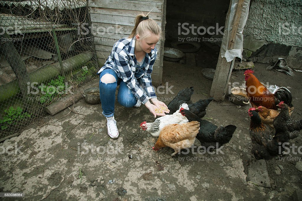 Laughing woman feeding big farm chickens and having fun stock photo