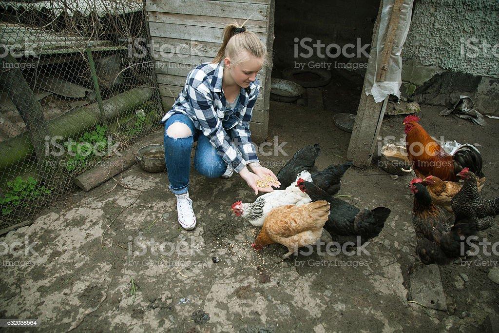 Laughing woman feeding big farm chickens and having fun stock photo