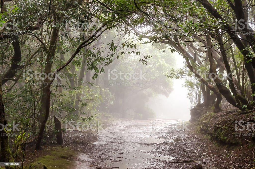 Laurel forest stock photo