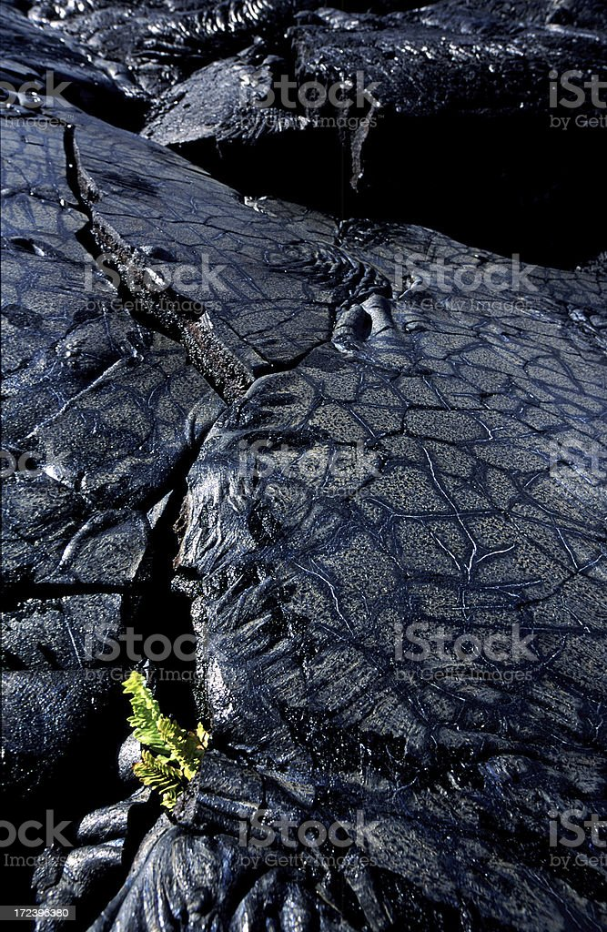 Lava Beds with New Growth royalty-free stock photo