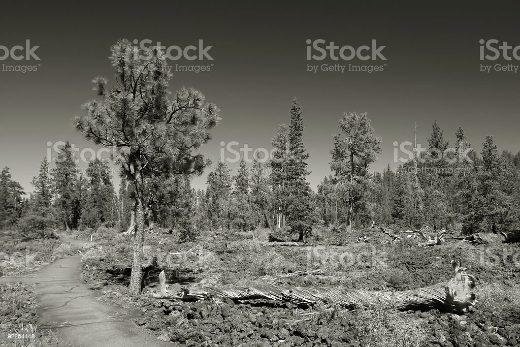 Lava Cast Forest, Newberry National Monument royalty-free stock photo