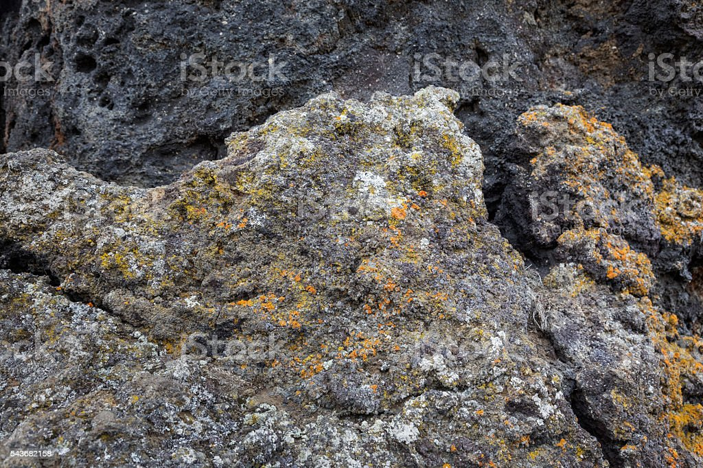 Lava field covered by moss in Myvatn, Iceland stock photo