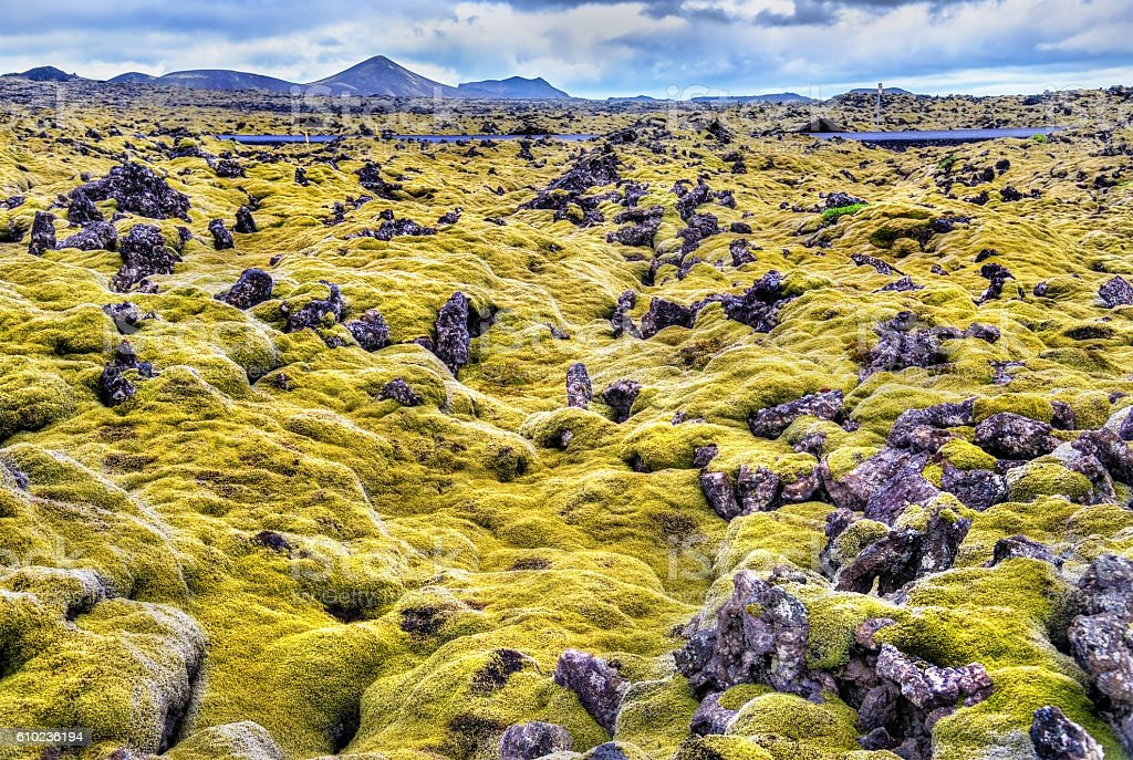 Lava stones with moss in Iceland stock photo