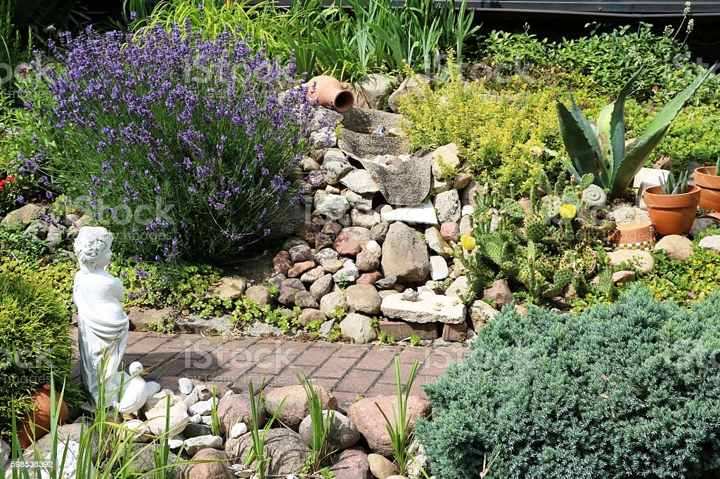 Lavandula angustifolia in the rock garden, Germany stock photo