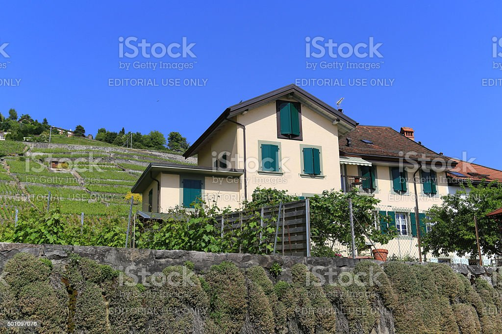 Lavaux vineyards on Lake Geneva, Switzerland stock photo