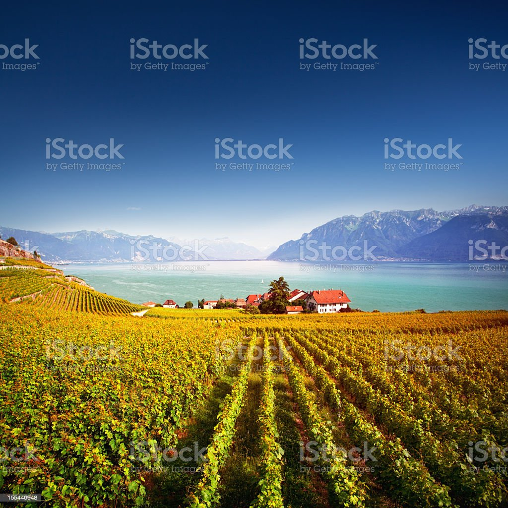 Lavaux vineyards stock photo