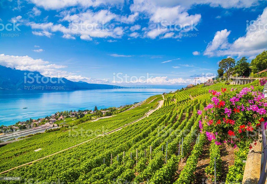 Lavaux wine region at Lake Geneva, Switzerland stock photo