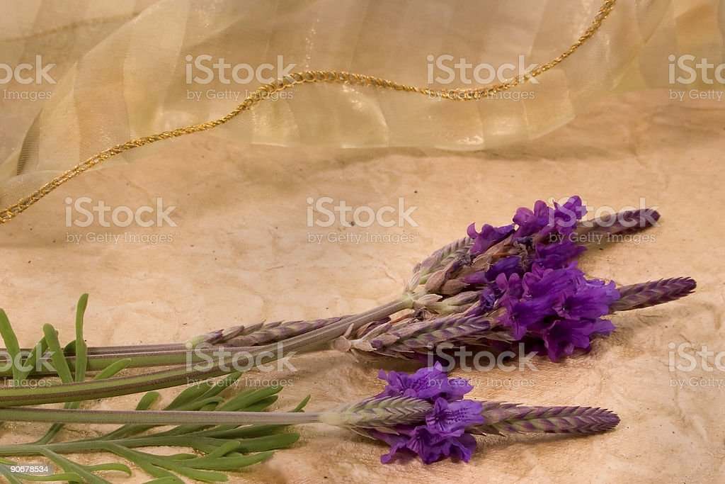 Lavendar and Lace royalty-free stock photo