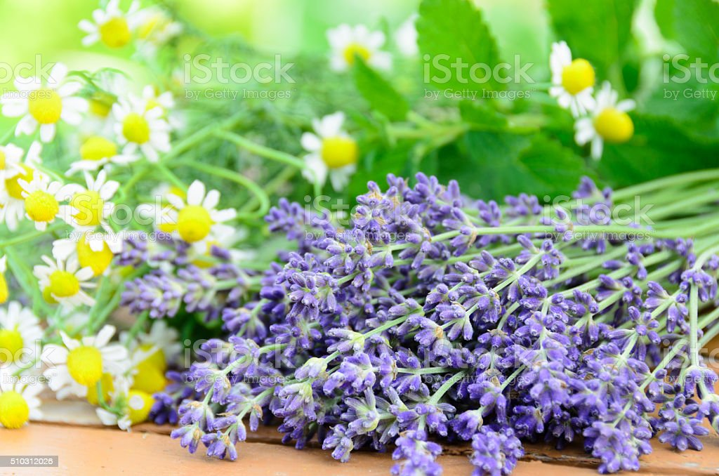 lavender and chamomile stock photo