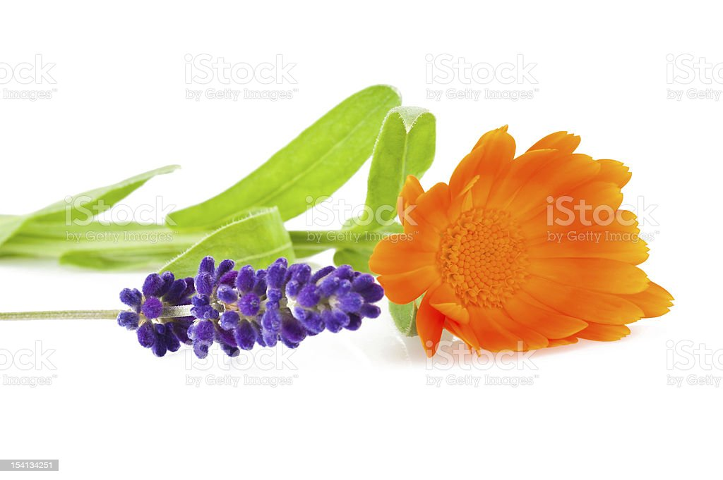 lavender and marigold stock photo
