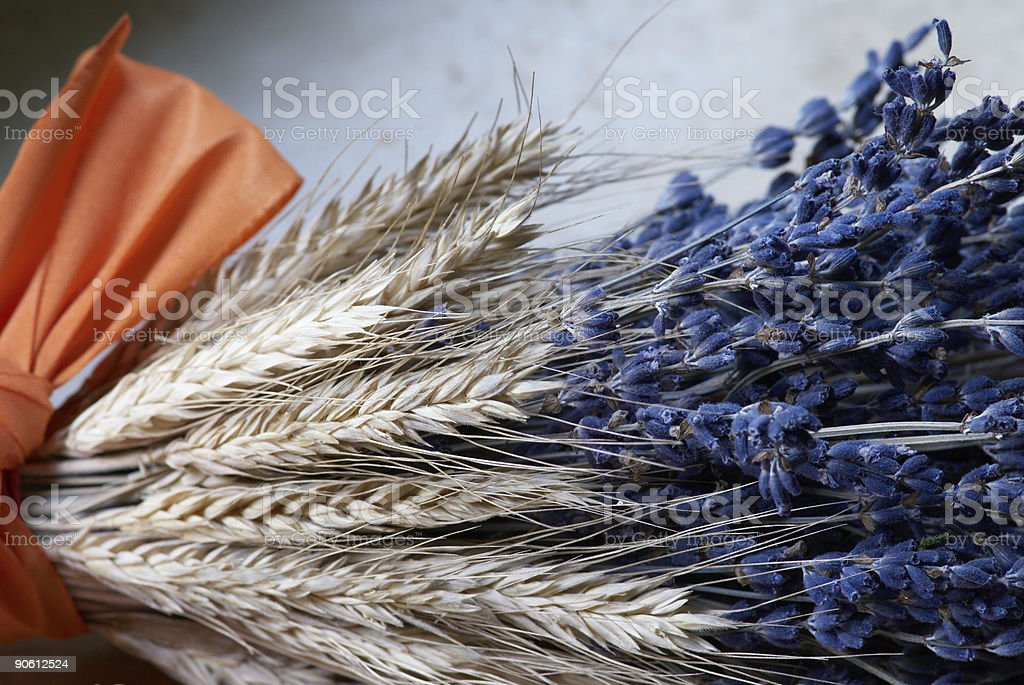 Lavender And Rye royalty-free stock photo
