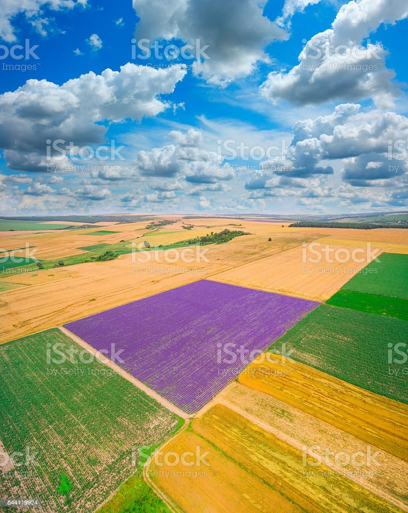 Lavender and wheat fields with clouds stock photo