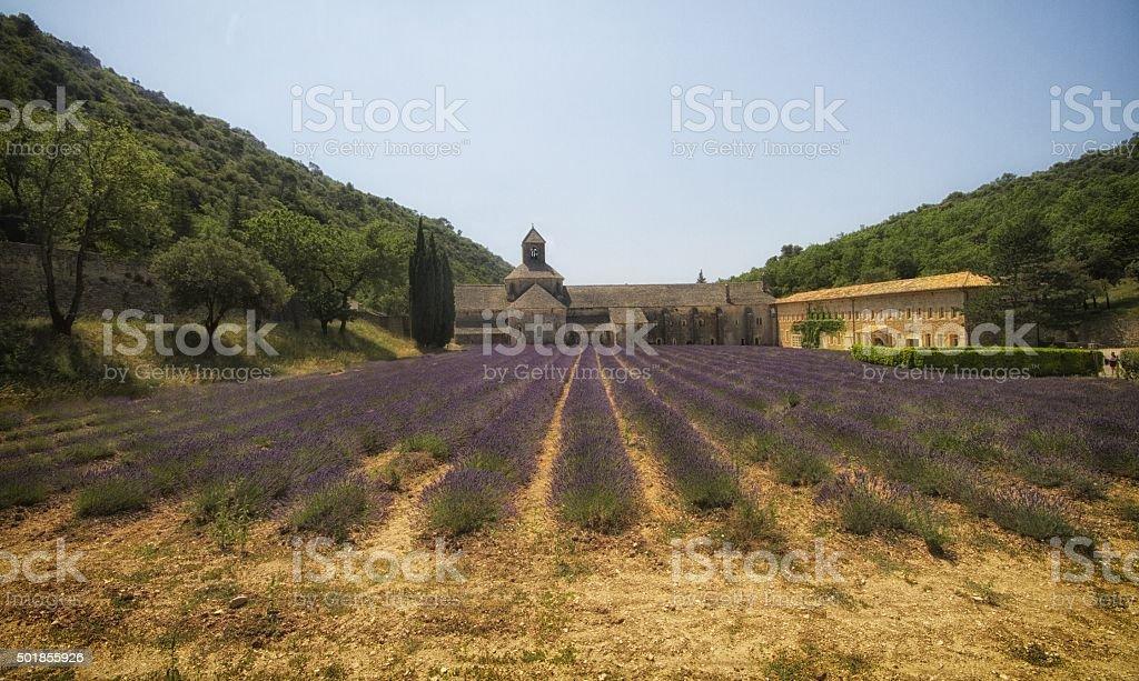 lavender at Abbay de Senanque, France stock photo