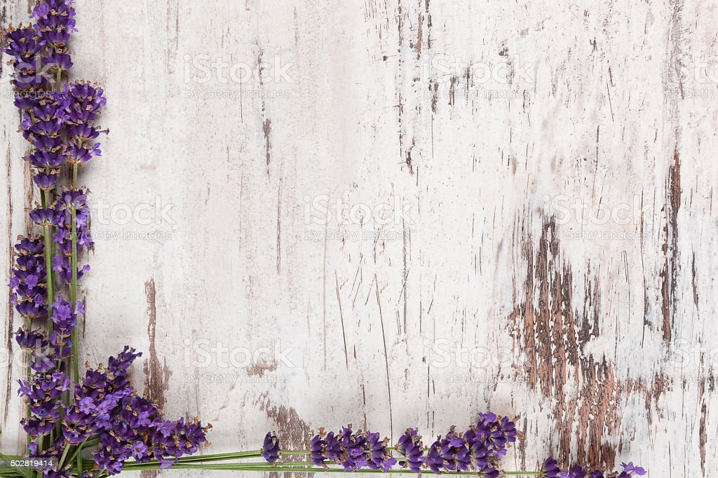 Lavender background. stock photo