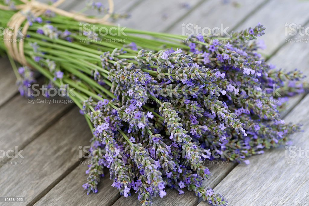 Lavender blue close-up royalty-free stock photo
