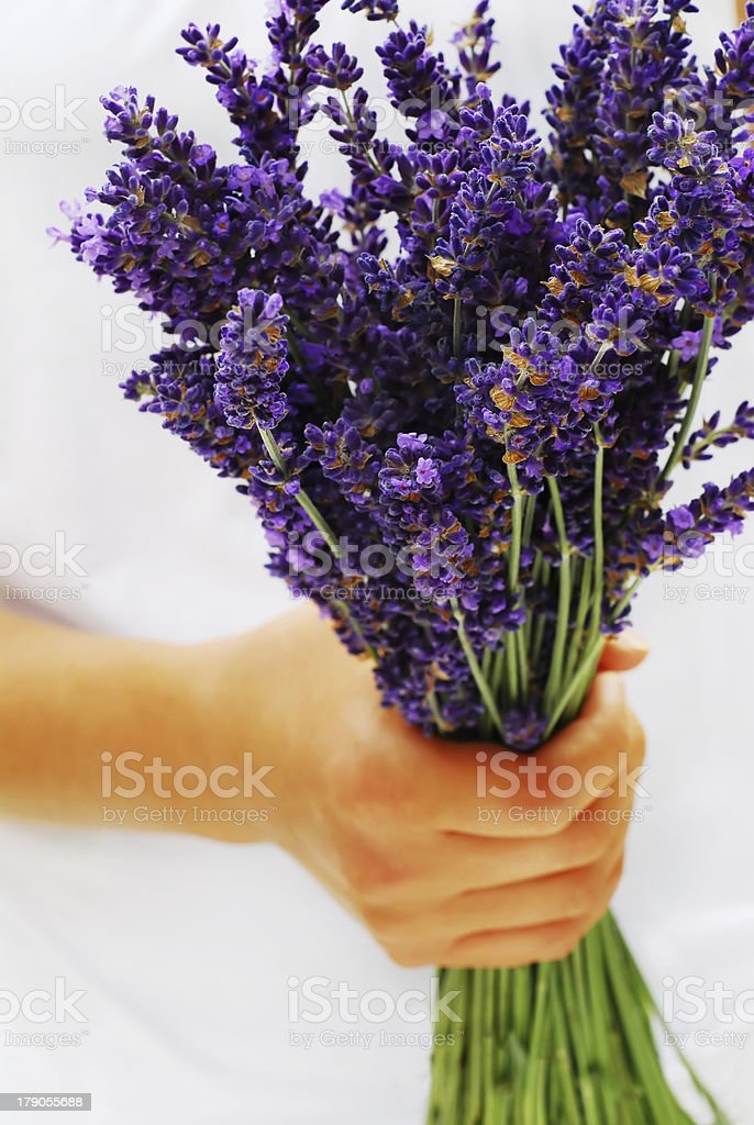 Lavender Bouquet royalty-free stock photo