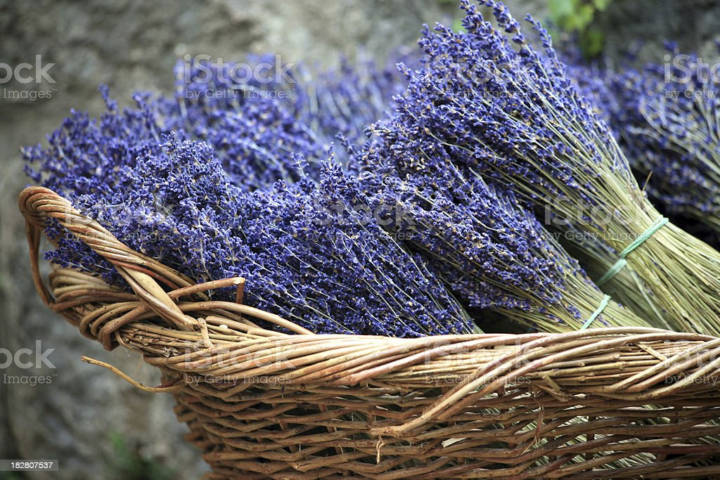 Lavender bouquets in a basket royalty-free stock photo