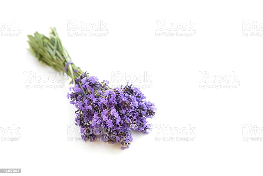 Lavender  bunch isolated royalty-free stock photo