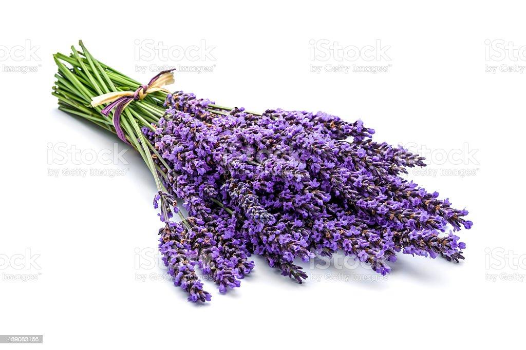 Lavender bunch stock photo