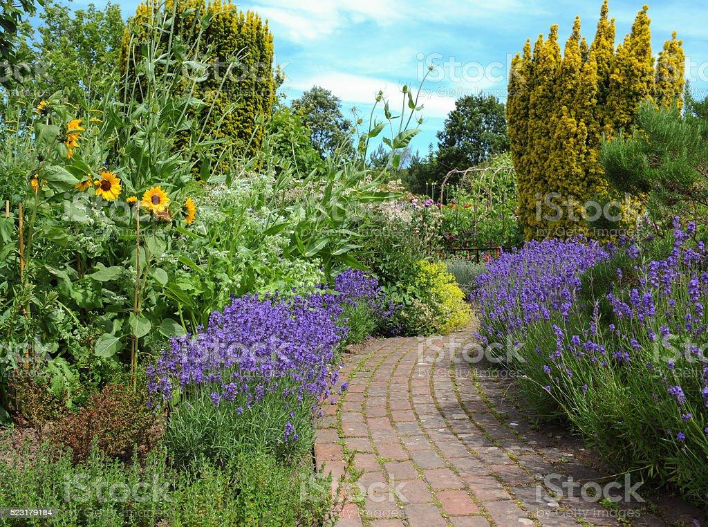 Lavender Bushes (Lavandula) and Sunflowers (Helianthus) Beside a Footpath stock photo