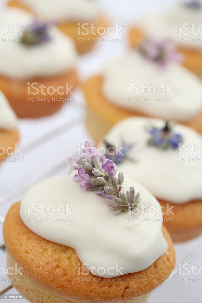 lavender cup cakes royalty-free stock photo