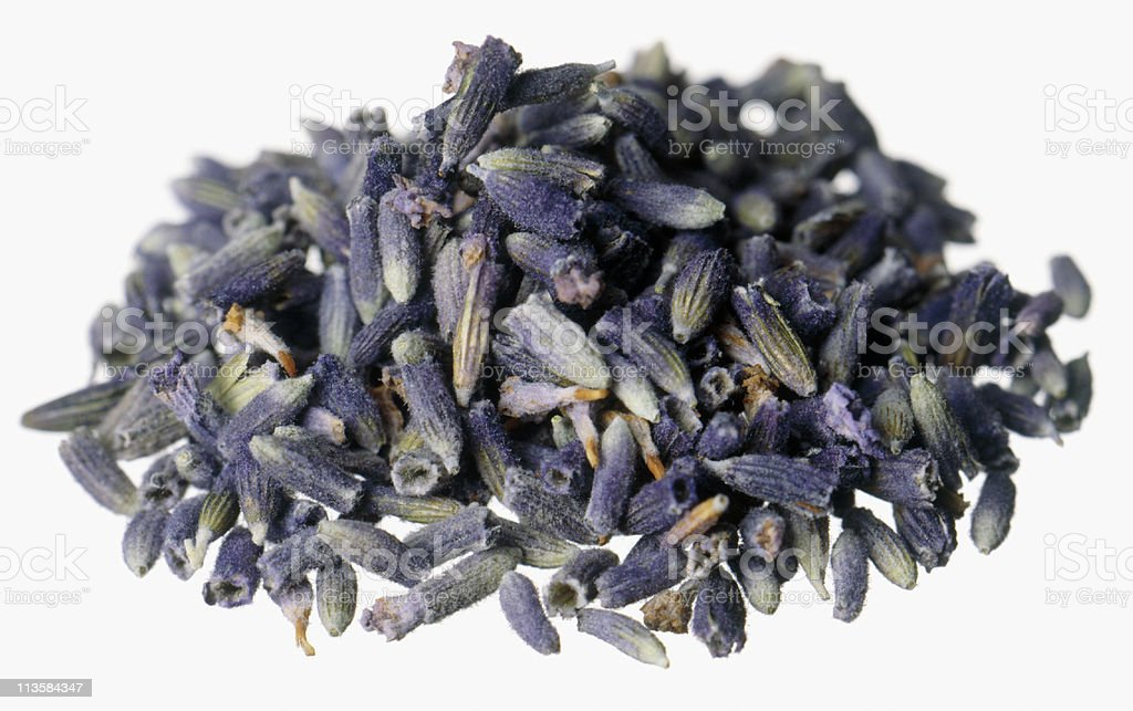 Lavender cut out on white royalty-free stock photo