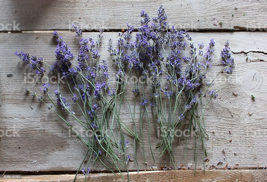 Lavender dry flowers on wooden surface stock photo
