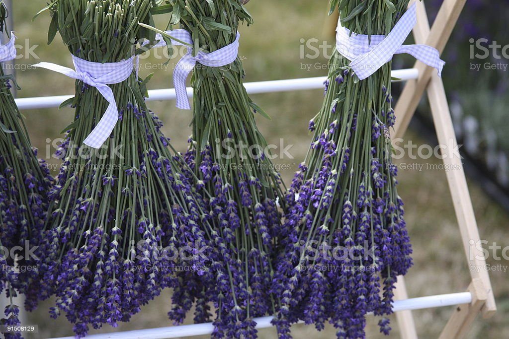 Lavender Drying royalty-free stock photo