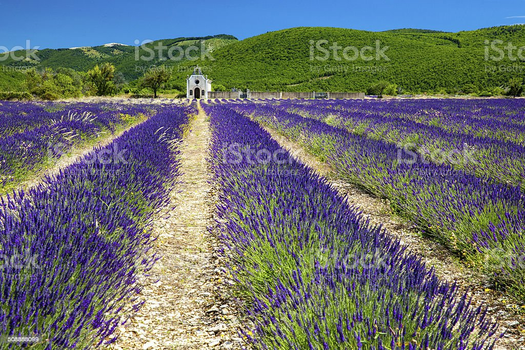 Lavender field and church at Lardiers, Provence stock photo
