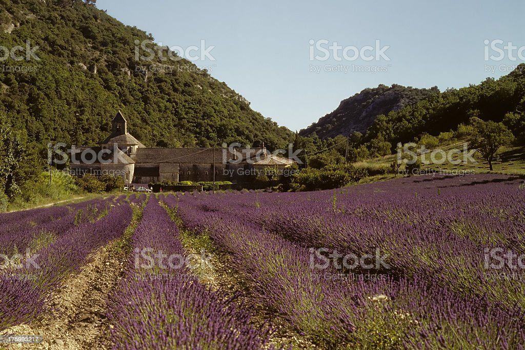 Lavender field at the Abbey of Senanque stock photo