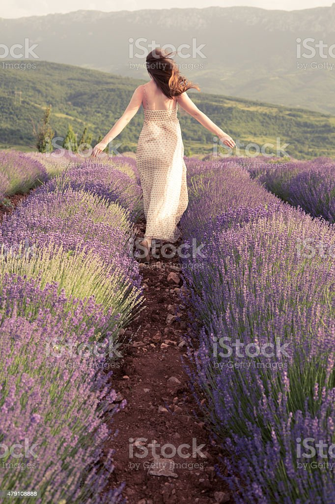 Lavender Field Therapy stock photo