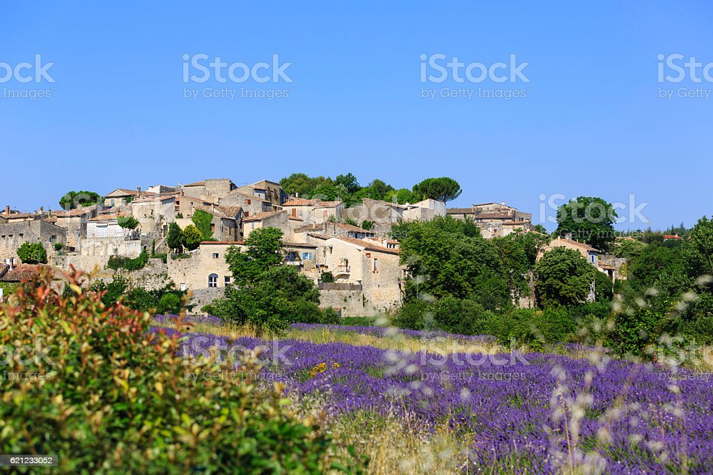 lavender field with a small town stock photo