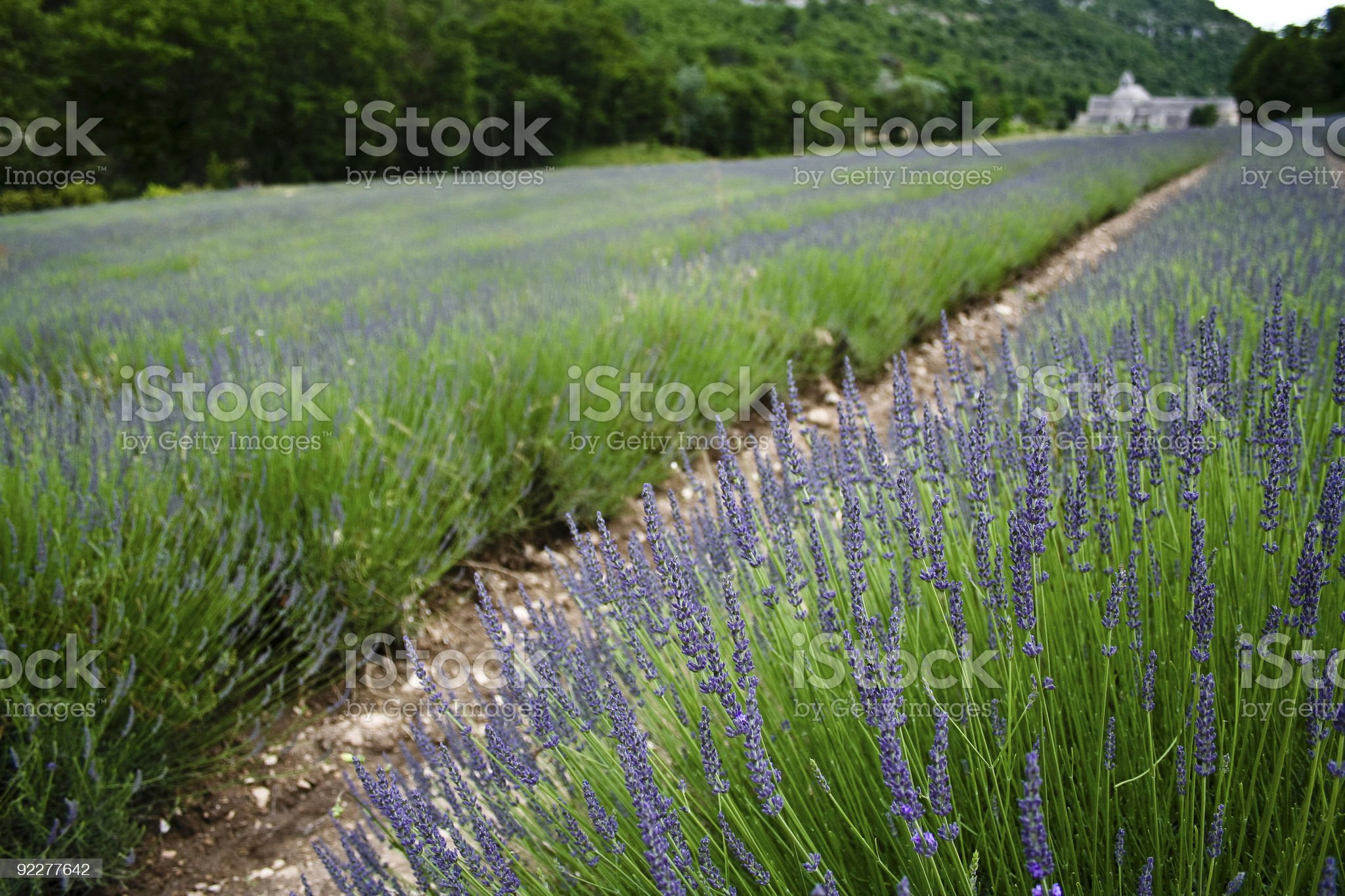 lavender fields abbey provence france royalty-free stock photo