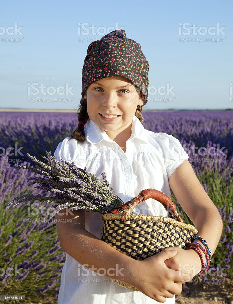Lavender fields royalty-free stock photo