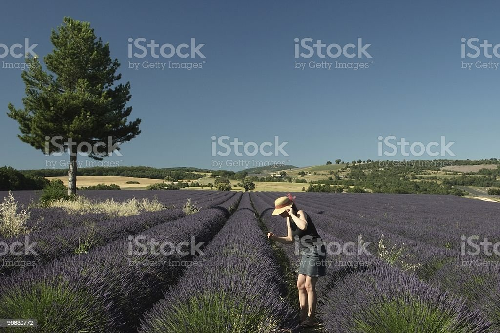 Lavender Fields with Farmer Girl stock photo