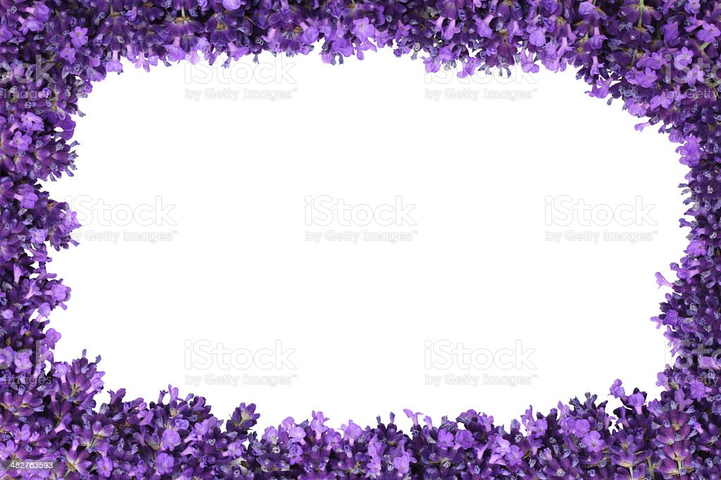 Lavender flower border isolated royalty-free stock photo
