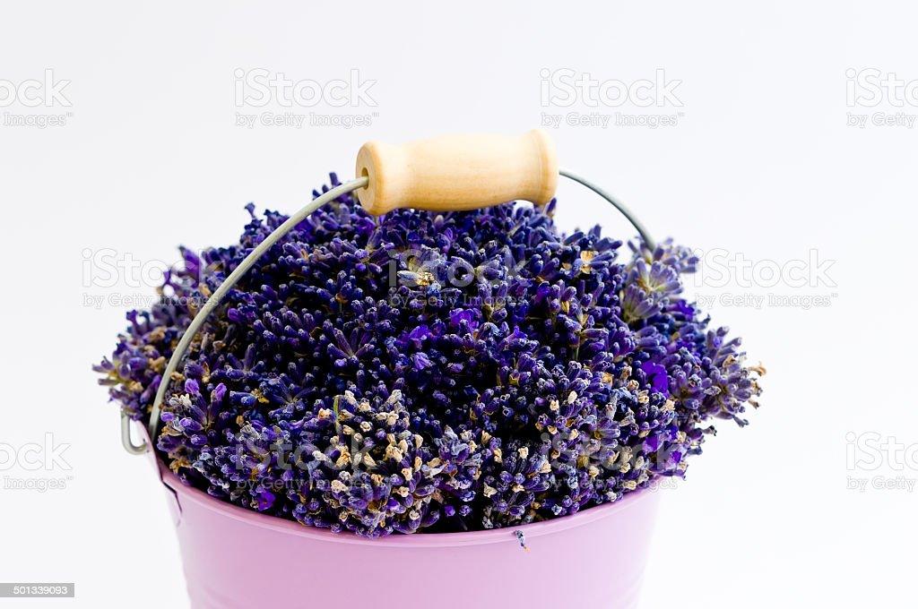 Lavender flower in purple bucket stock photo