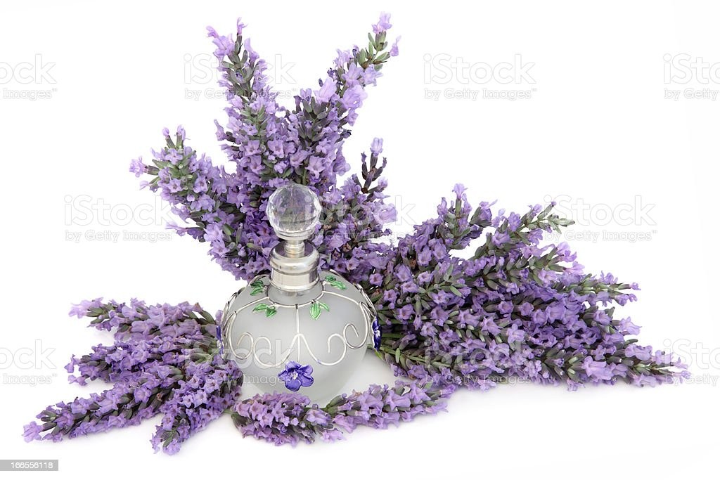 Lavender Flower Scent royalty-free stock photo