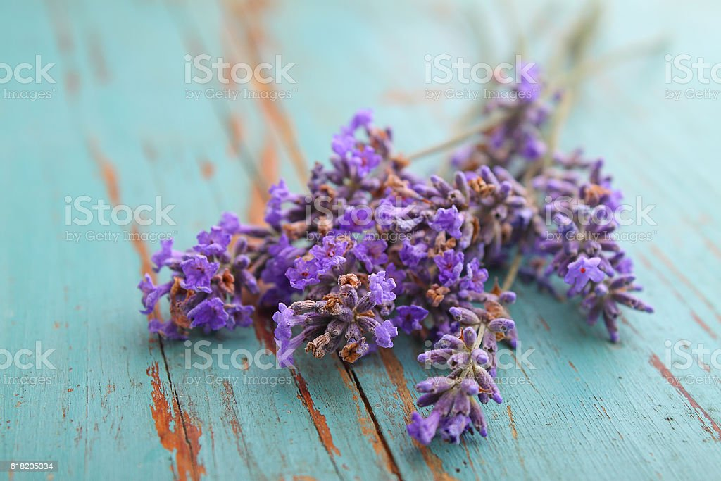 lavender flowers on a blue background stock photo