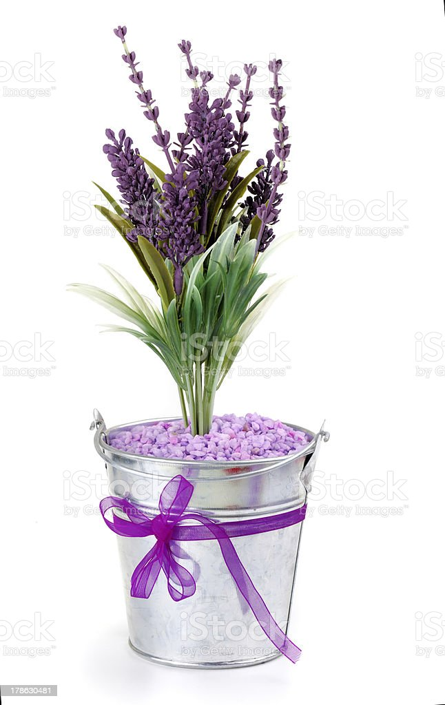 Lavender flowers royalty-free stock photo